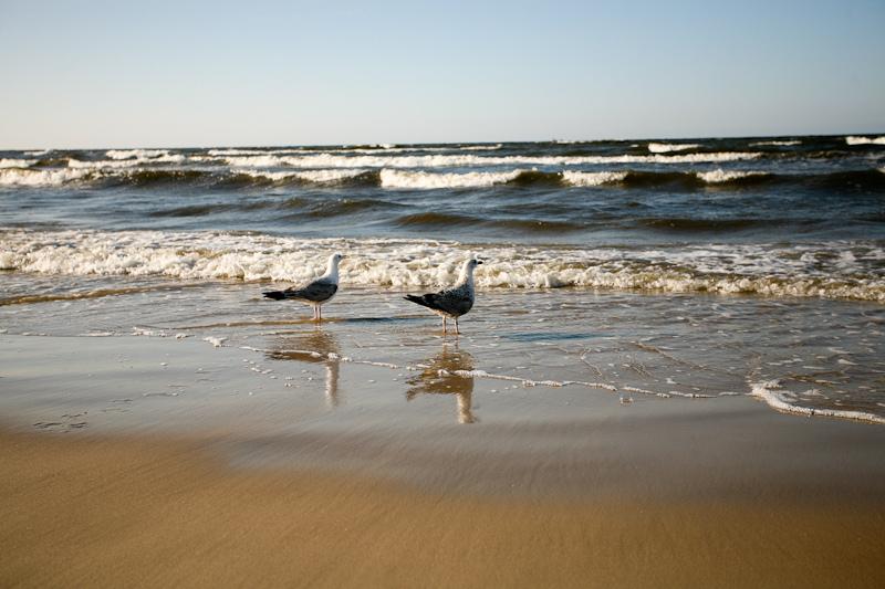 Чайки на морском берегу
